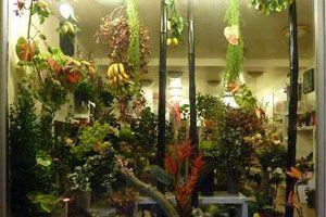 A Fleur D Eau Fleuriste Jardin Animaux Noisiel 77186 Avis