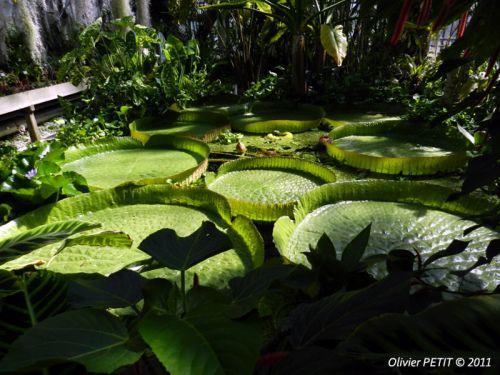 Jardins Botaniques Musees Site Touristique Villers Les Nancy
